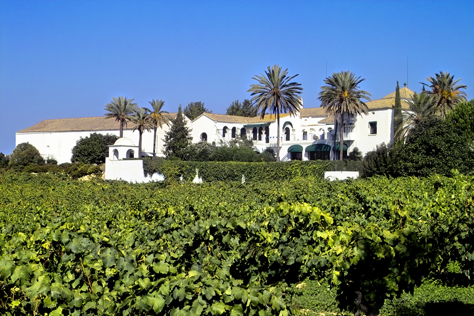 Finca Viladellops, which dates back to 1877, produces organic wines.