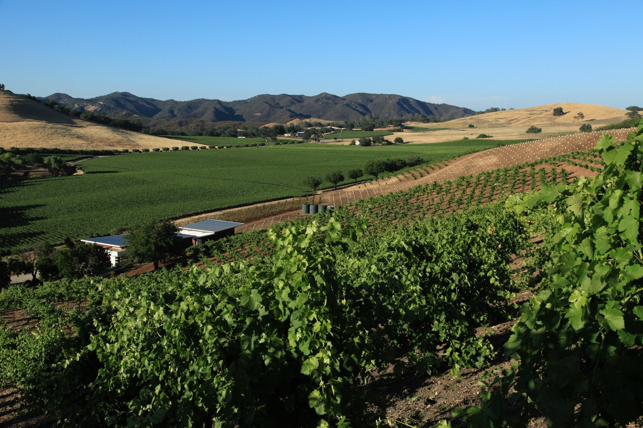 In addition to crops of walnuts and olives, Kukkula cultivates roughly 50 acres of primarily Rhône grapes.