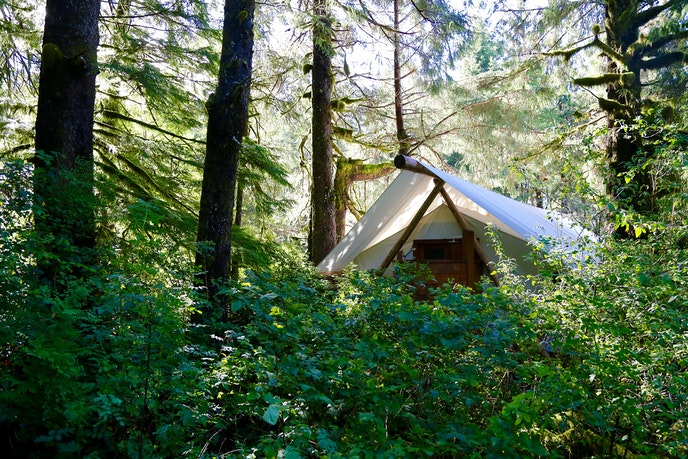 Clayoquot Wilderness Resort's tents are hidden within innumerable shades of green.