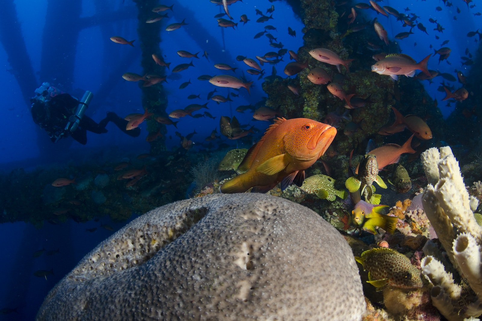 Platform HI-A-389 is part of the Flower Garden Banks National Marine Sanctuary, which is considered one of the healthiest reefs in the Caribbean and the Gulf of Mexico.