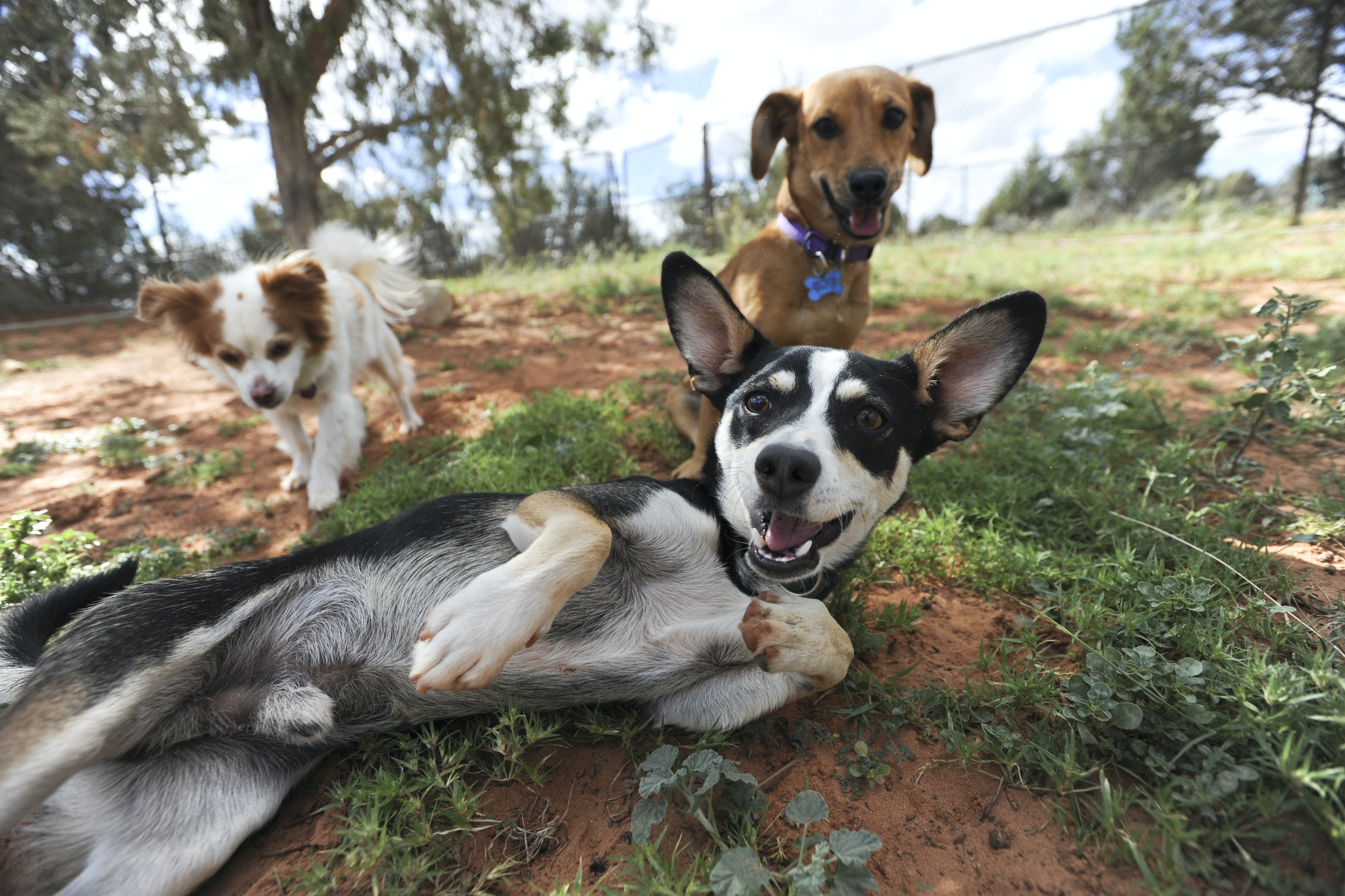 Red Mountain Resort takes its guests to Best Friends Animal Sanctuary, where 1,600 rescue animals live.