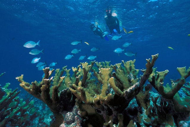 Snorkle or dive the reefs of Key West