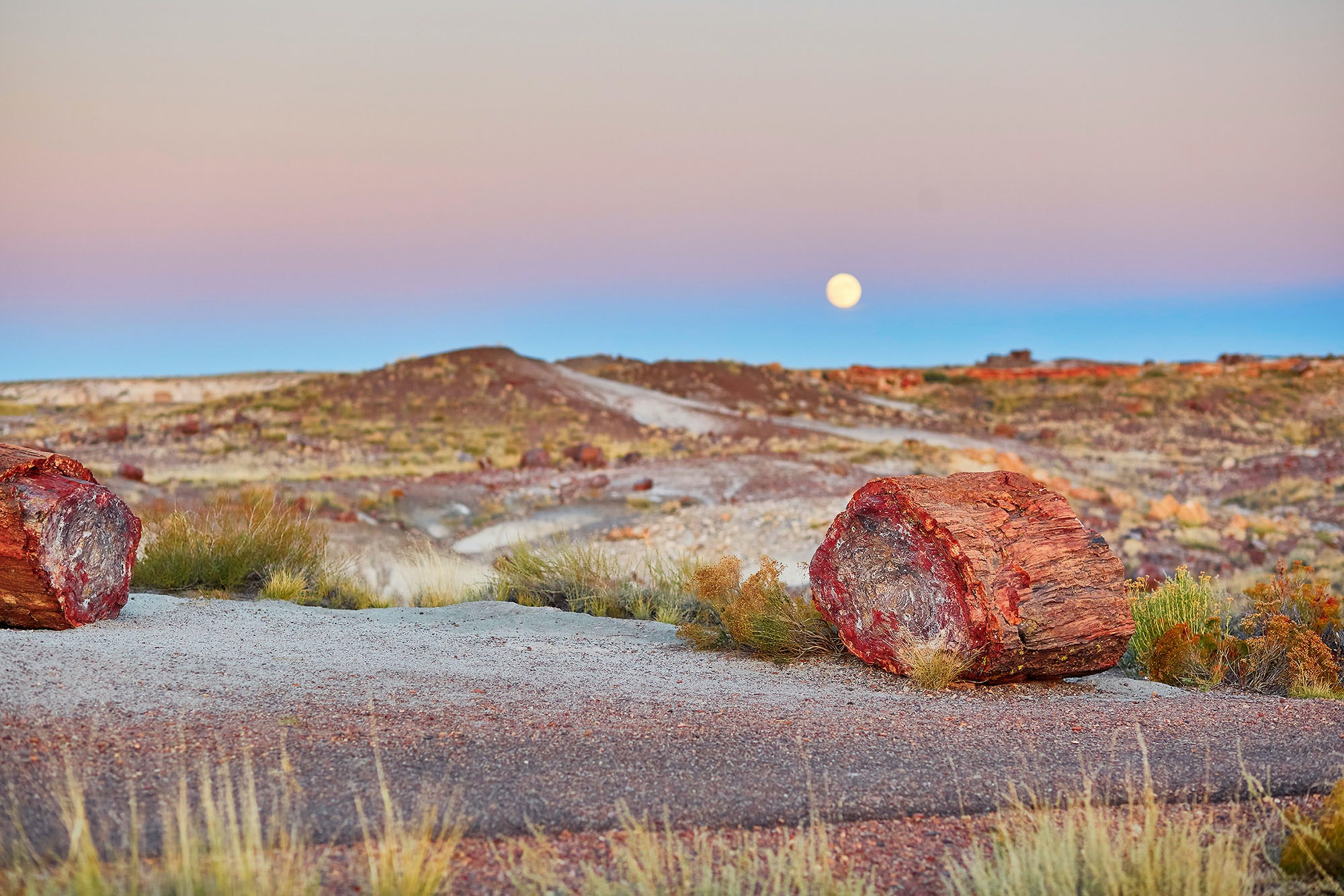 At Petrified Forest National Park, the slow process of fossilization transformed ancient trees into solid quartz.