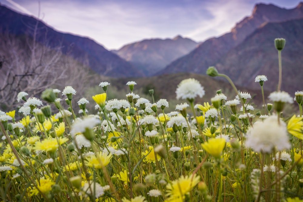 Spring brings a variety of wildflowers to California's largest state park.