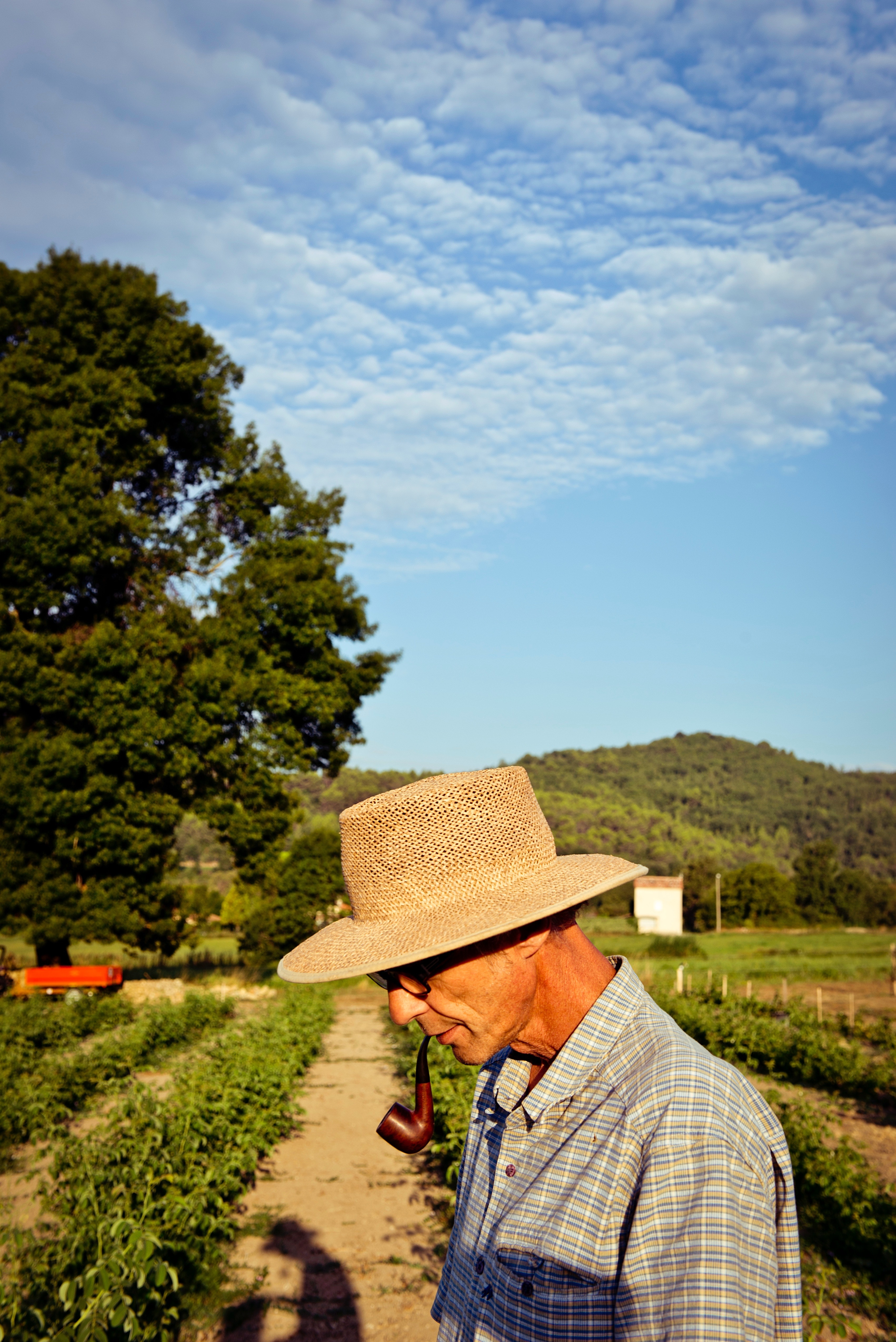 The future of jasmine in Grasse rests with farmers such as Rémy Foltête, who choose to cultivate the land rather than sell it off.
