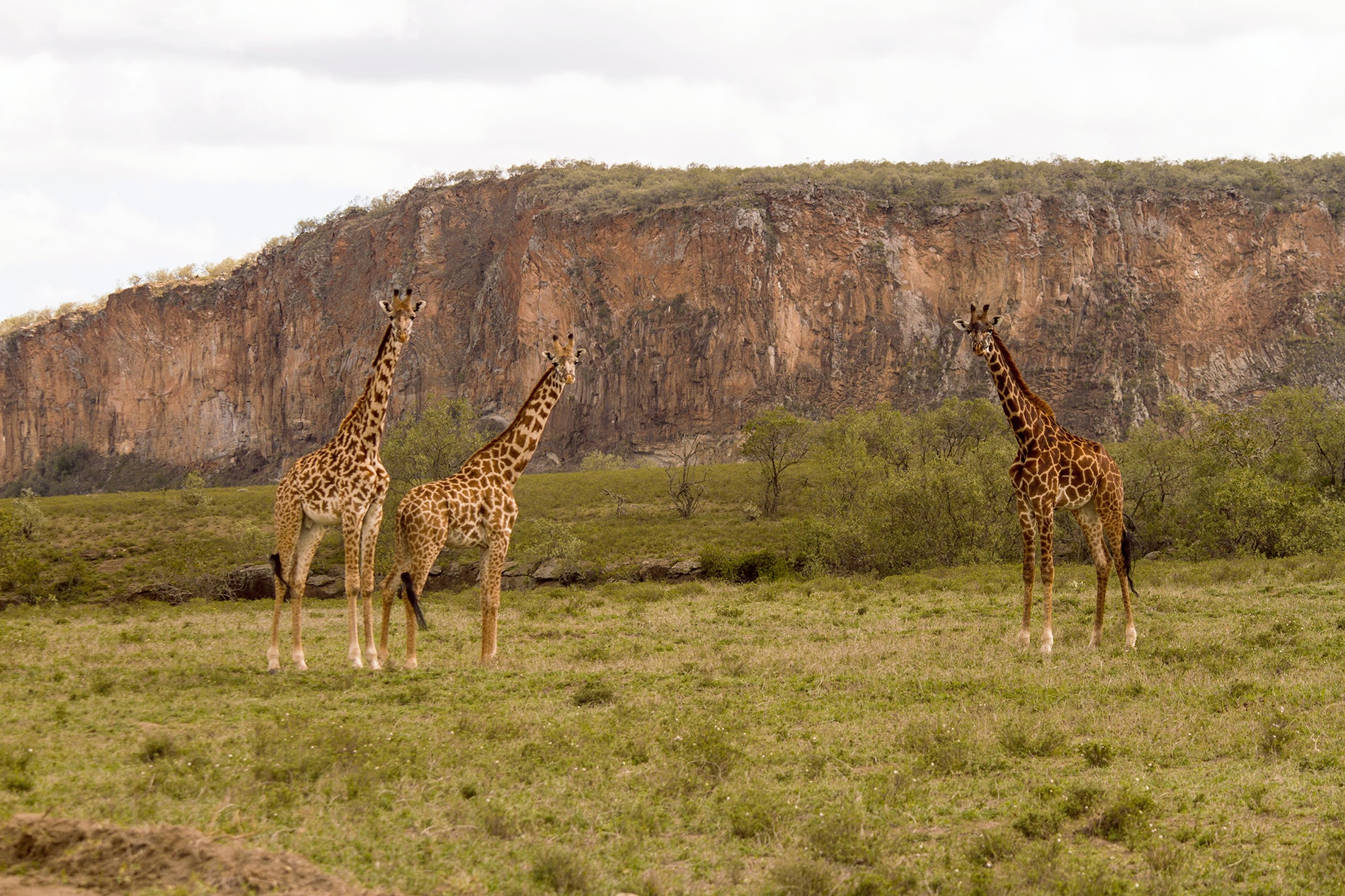 The sheer walls of Hell's Gate National Park create a haven for peaceful creatures.