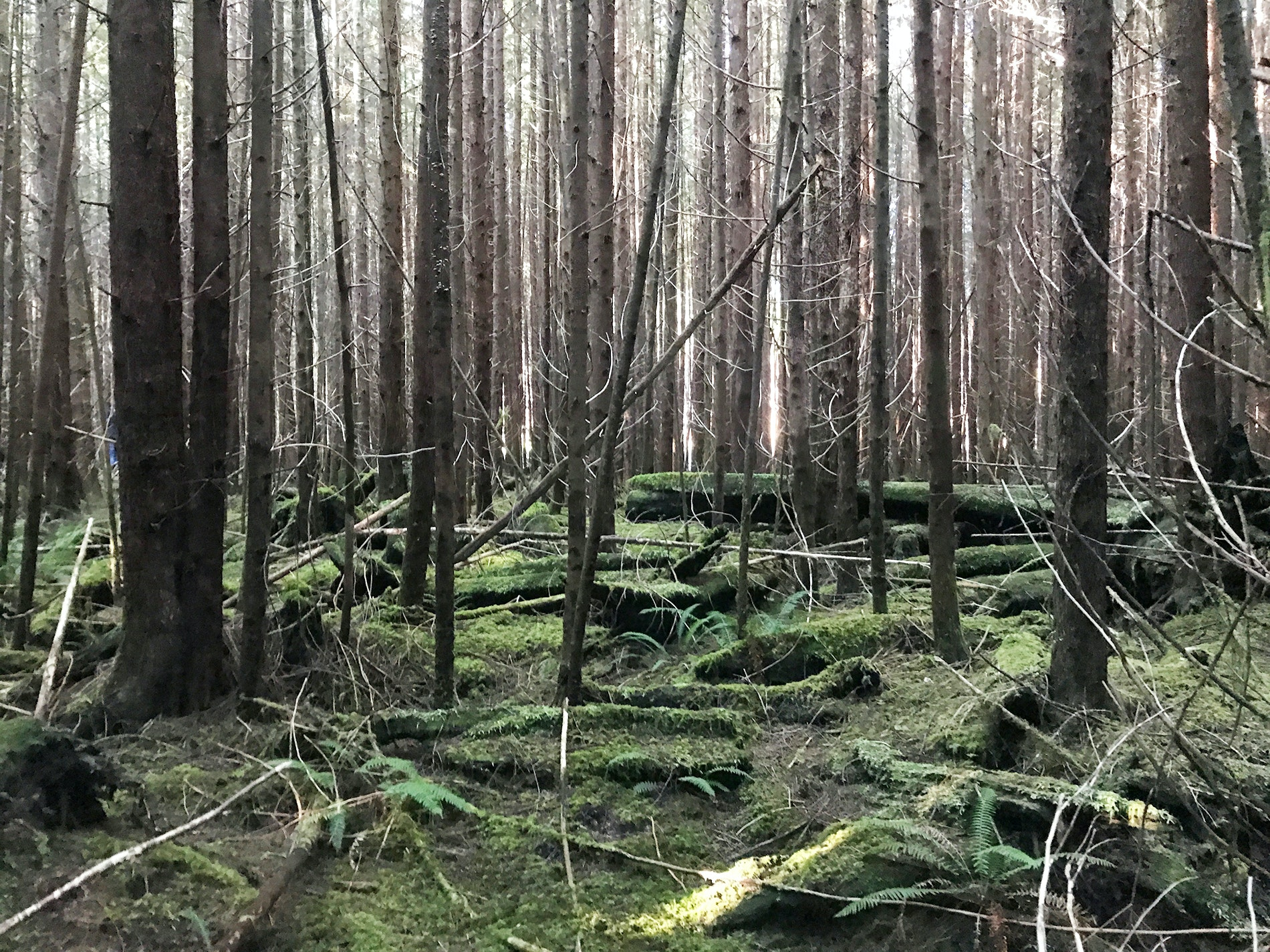 The soft, mossy, serene forest—a wild mushroom heaven—found near Tofino's Kennedy Lake