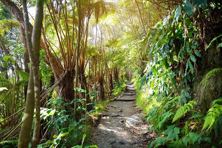 The Kilauea Iki Trail is a four-mile loop through the Big Island's lush forest and into a solidified lava lake.