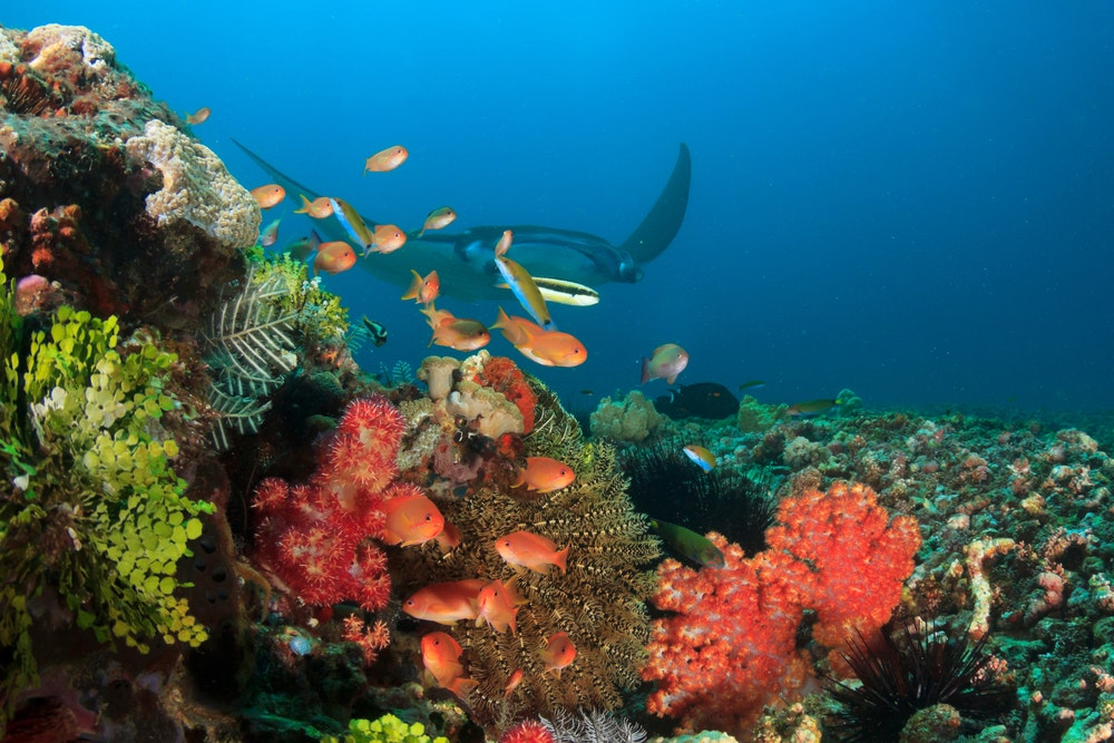 Marine life abounds underwater at Komodo National Park.
