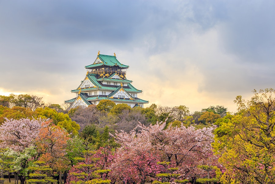 The cherry blossoms in Osaka tend to start blooming by late March and peak in early April.