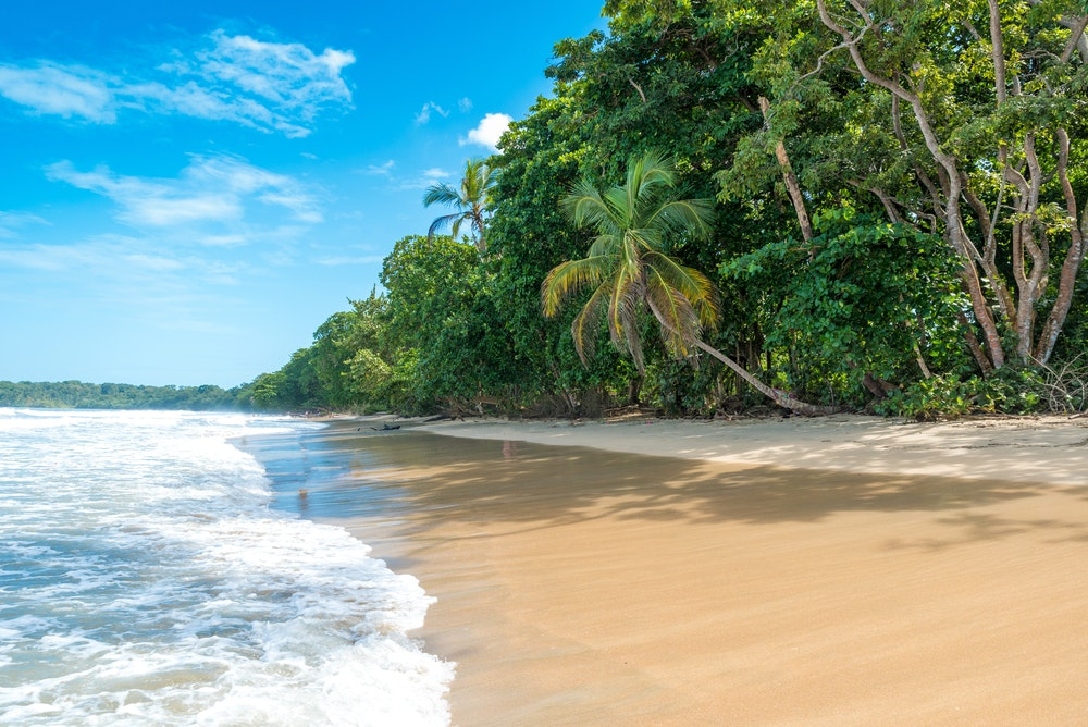 Cahuita National Park, on the Caribbean side of Costa Rica, is home to hundreds of animal and plant species.