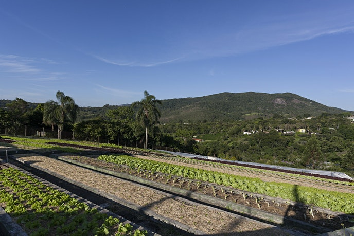 The hotel grows everything from cabbage to cauliflower across 15 acres.