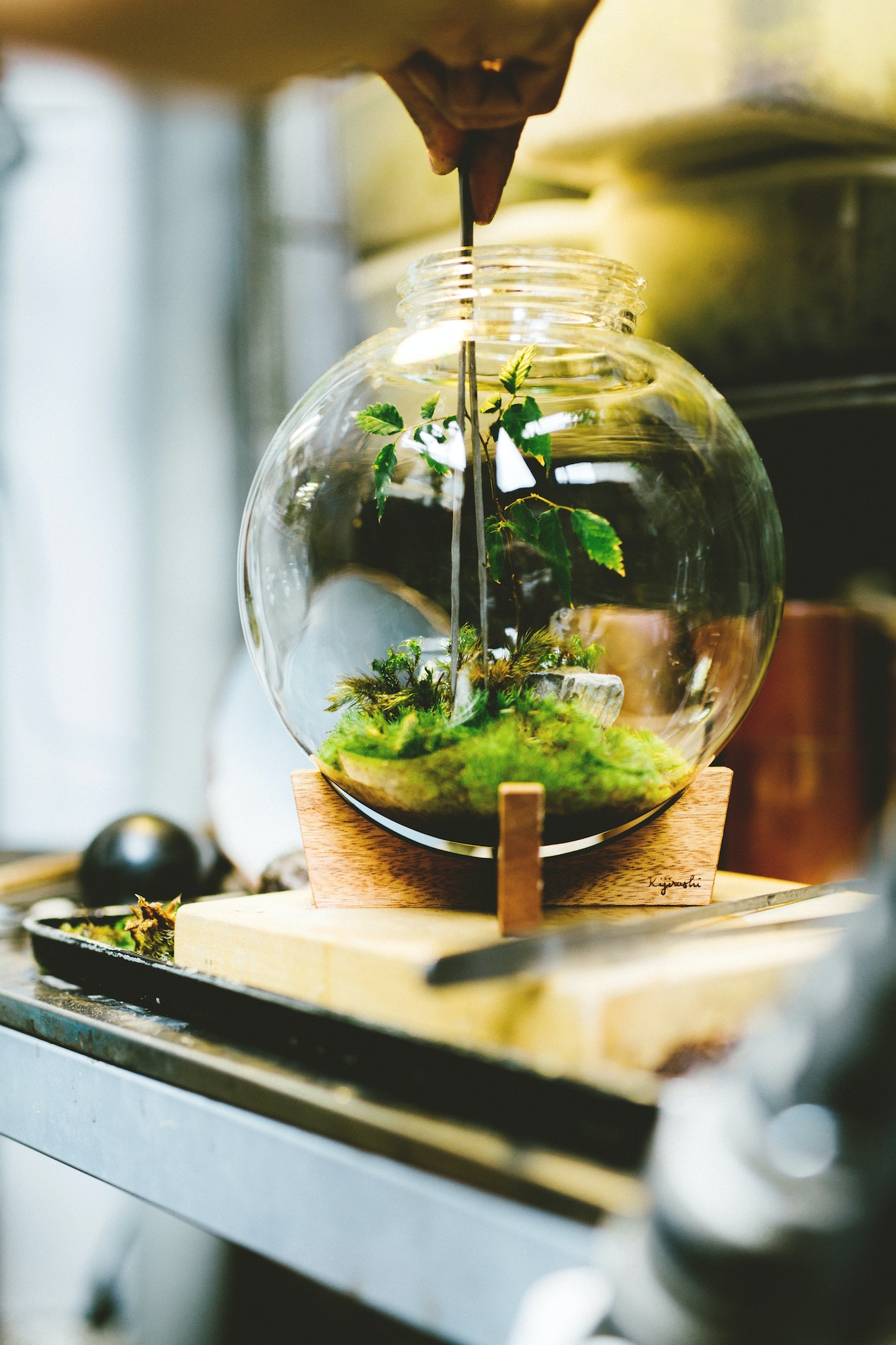Murase Takaaki creatively recycles lamp glass, found objects, and foraged and rescued plants to make his SpaceColony terrariums at Re:planter.