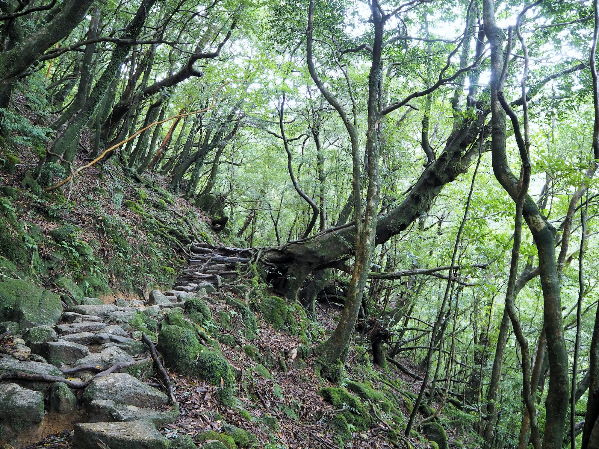 The Shiratani Unsuikyo Ravine offers a network of well-maintained hiking trails surrounded by ancient cedars.