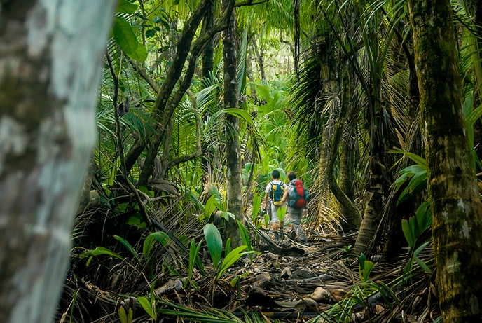 Corcovado National Park encapsulates beach, swamps, and forest, making it ideal for hiking and wildlife viewing.