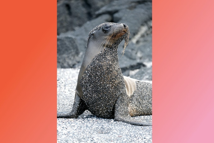 A long zoom lens allowed me to capture this portrait of a young sea lion without breaking any national park rules.