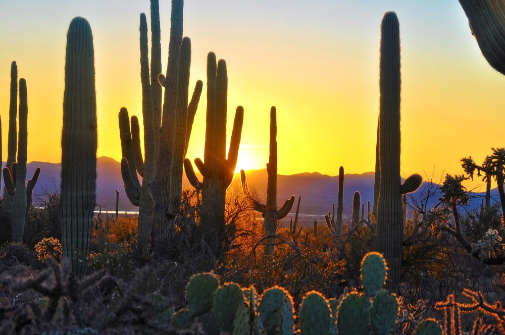 Hike to watch the sunset in Saguaro National Park.