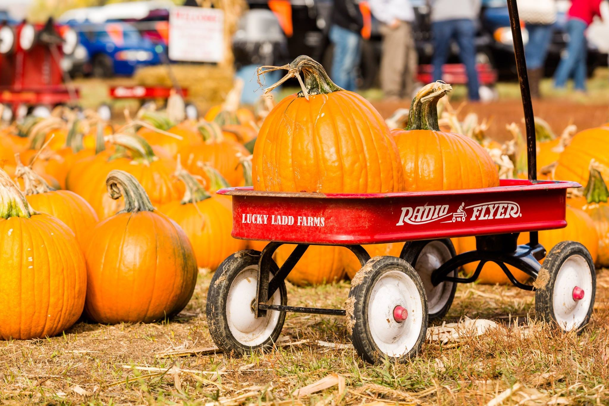 Find your next favorite pumpkin in a town 45 minutes south of Nashville.