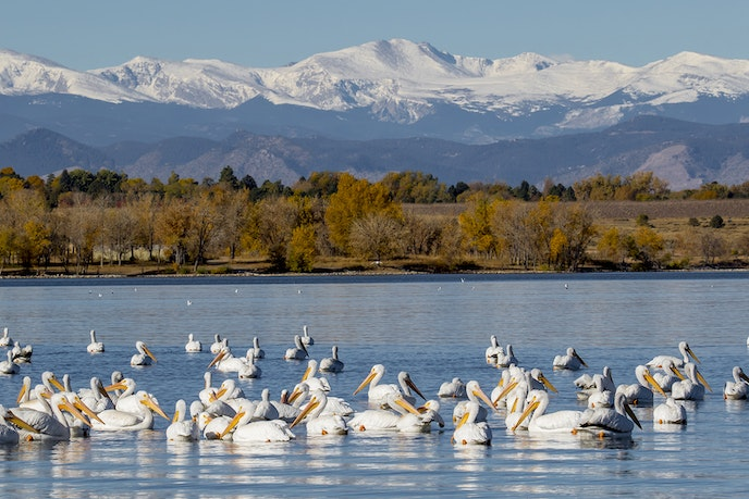 Denver's Cherry Creek State Park is also a popular place for bird-watching.