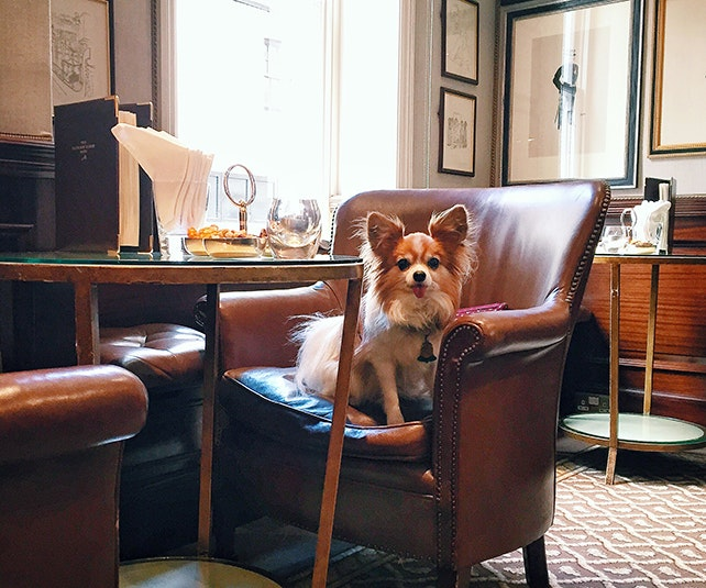 London's Egerton House Hotel extends its award-winning service to man's best friend