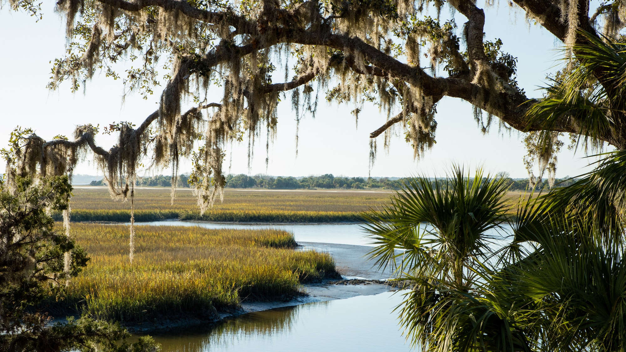 Spanish moss hangs over the marsh on Cumberland Island.