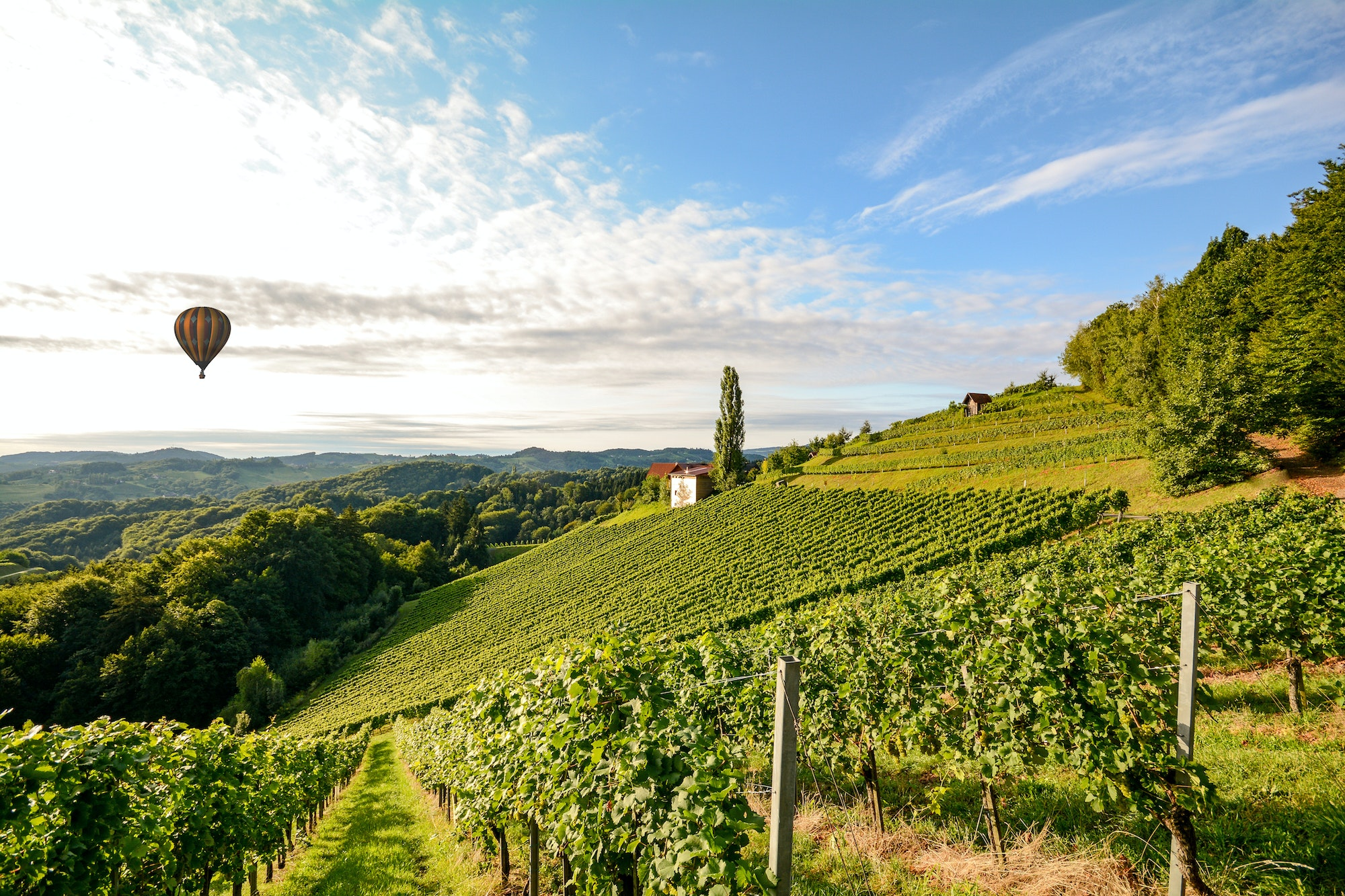 Situated in Tuscany, Chianti is one of Italy's best-known wine districts.