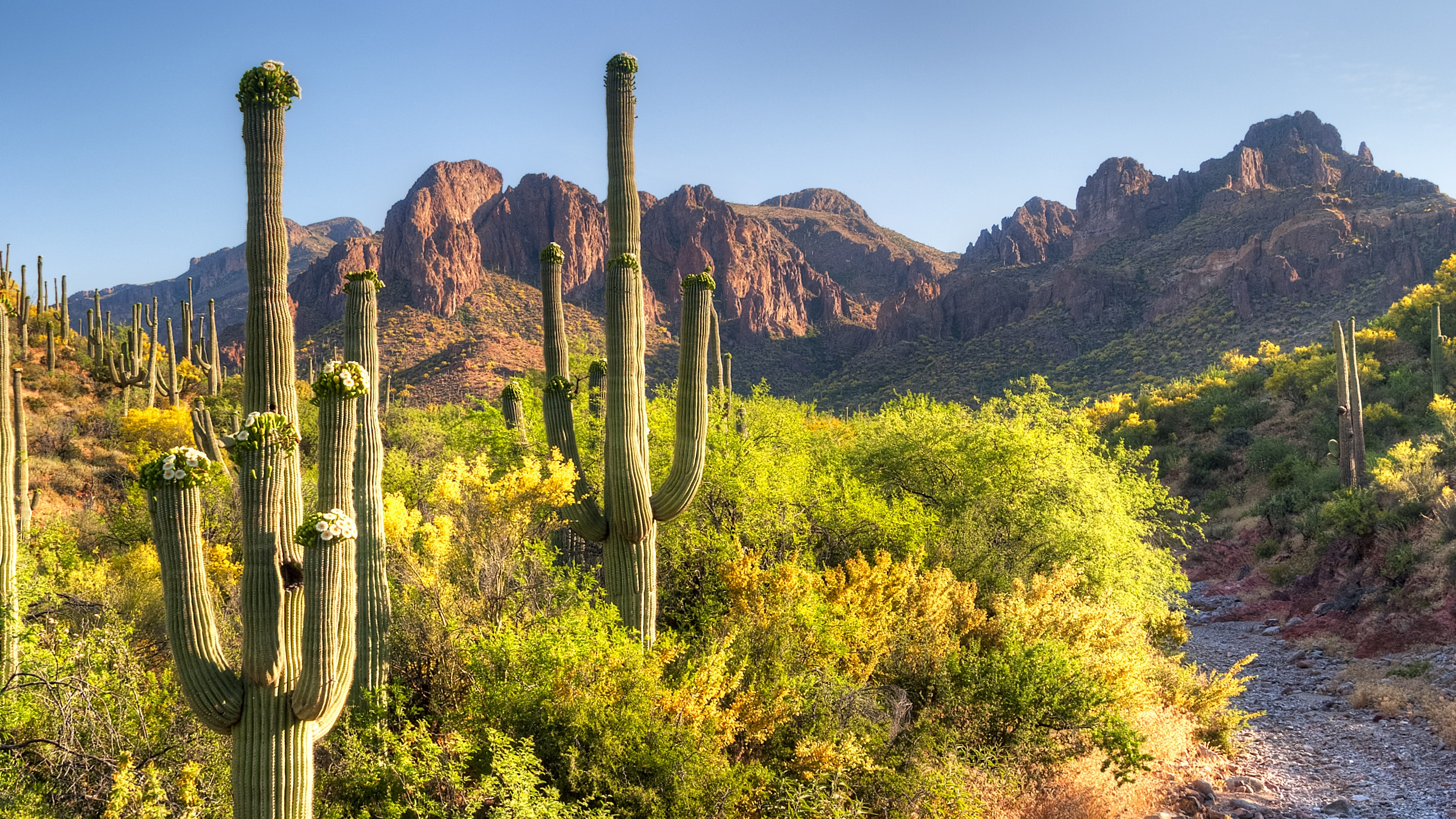Saguaro National Park consists of two sections situated around Tucson, Arizona.