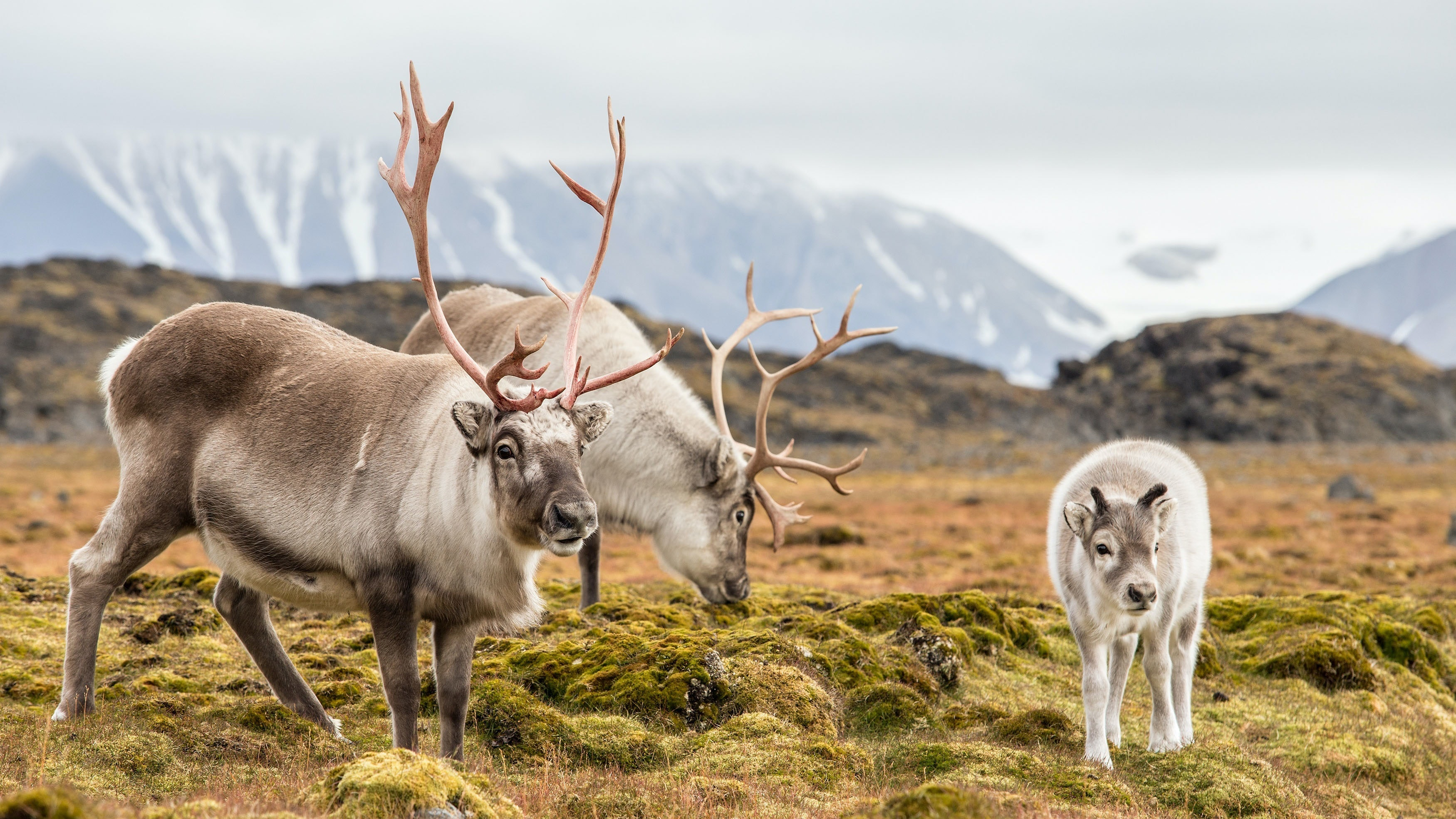 Reindeer above the Arctic Circle don't need smartphones and neither do you.
