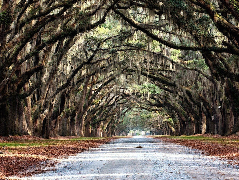 Discover the Wormsloe Plantation Savannah Georgia United States