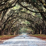 Wormsloe State Historic Sites