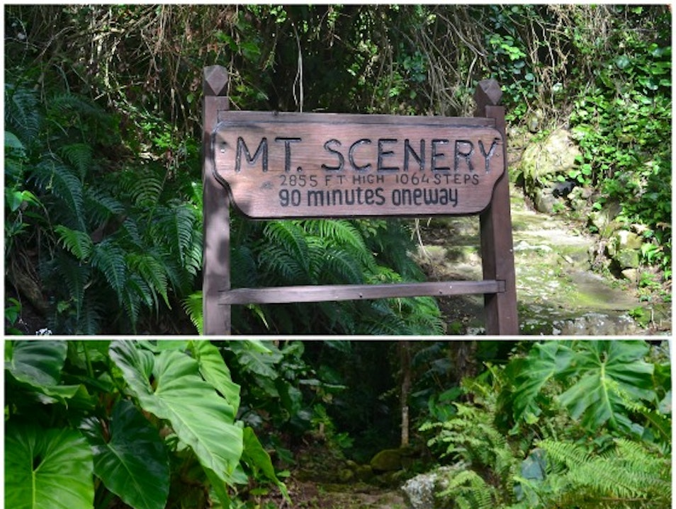 Rainforest Hike with Worth the Effort Saba  Caribbean Netherlands