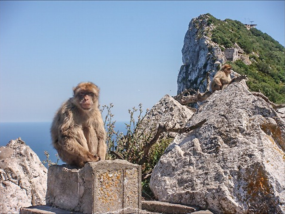 Don't feed the macaques! Gibraltar  Gibraltar
