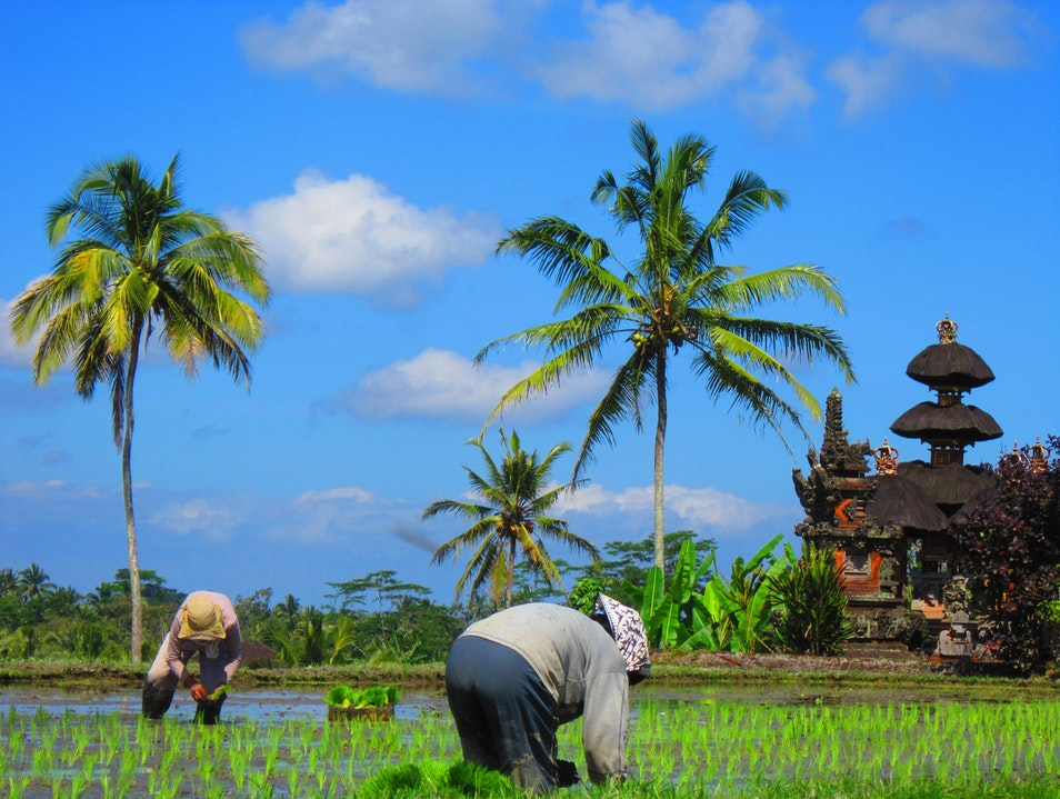 Ubud's Countryside Ubud  Indonesia