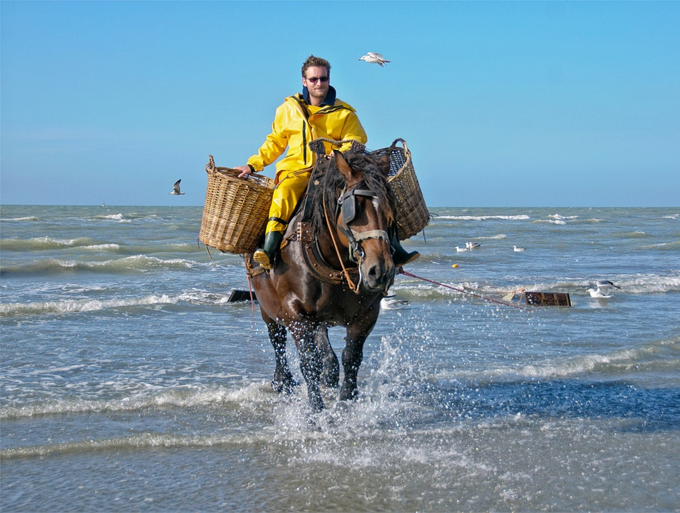 Shrimp Fishing on Horseback—a Belgian Tradition Koksijde  Belgium