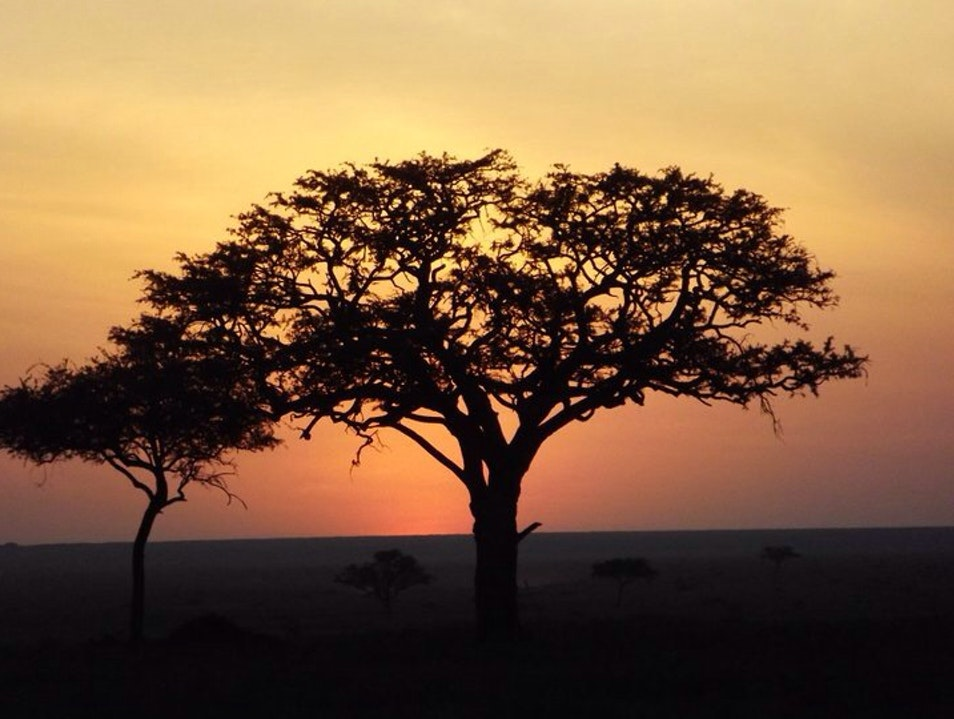 July In The Serengeti
