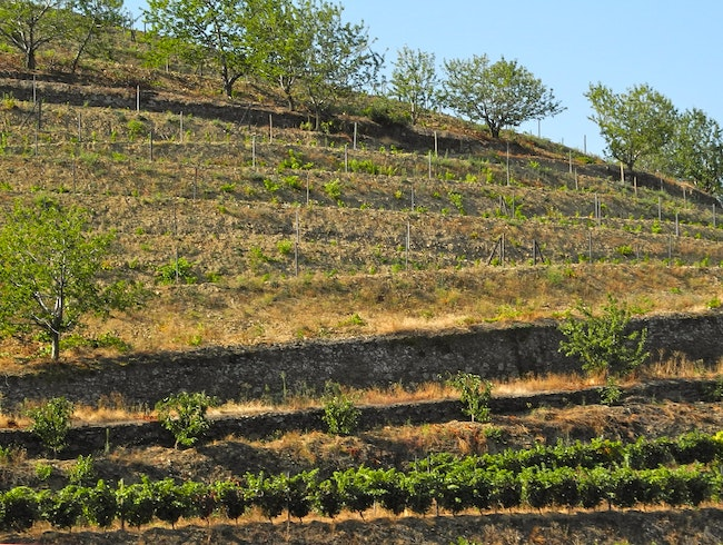 Hillside Vines and Fabulous Wines