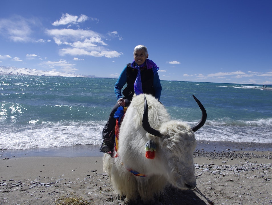 Take pictures with Tibetan yarks