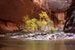 Serenity on the Virgin River: The Narrows in Autumn Kanab Utah United States