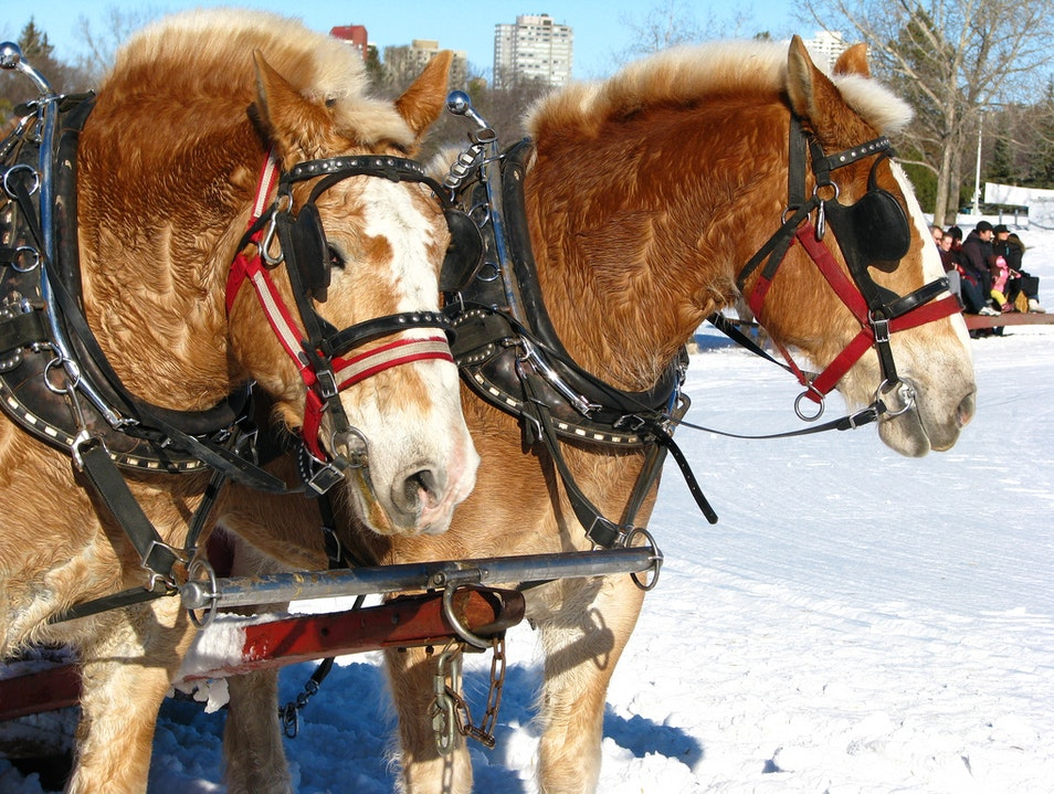 Sleigh Ride  Mont-Tremblant  Canada