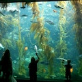 Birch Aquarium at Scripps Institution of Oceanography San Diego California United States