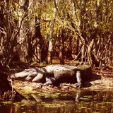 Honey Island Swamp Tours