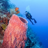 Enjoy the Life Aquatic in the Belize Barrier Reef