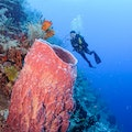 Enjoy the Life Aquatic in the Belize Barrier Reef   Belize