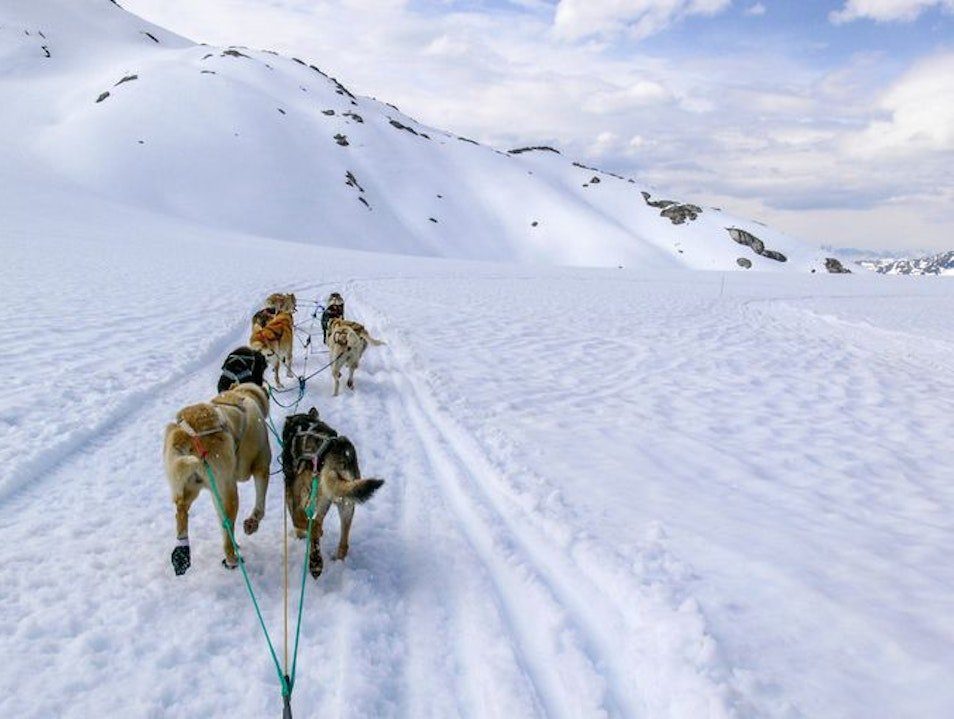 Dog-sledding in Skagway, Alaska Skagway Alaska United States