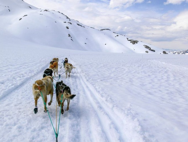 Dog-sledding in Skagway, Alaska