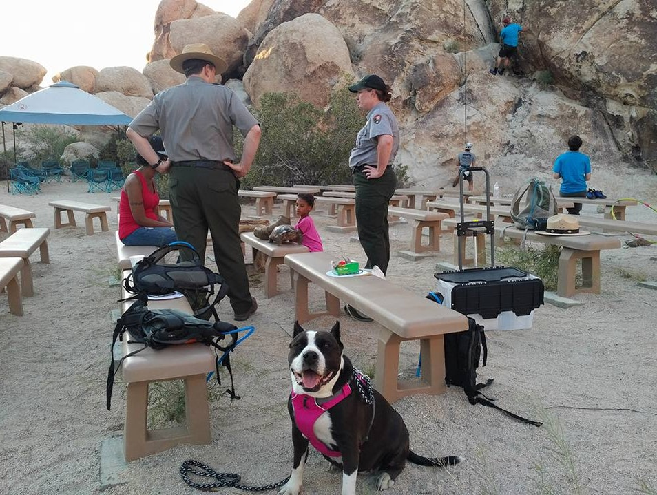 Stargazing with Rangers while Camping with Coleman in Joshua Tree National Park