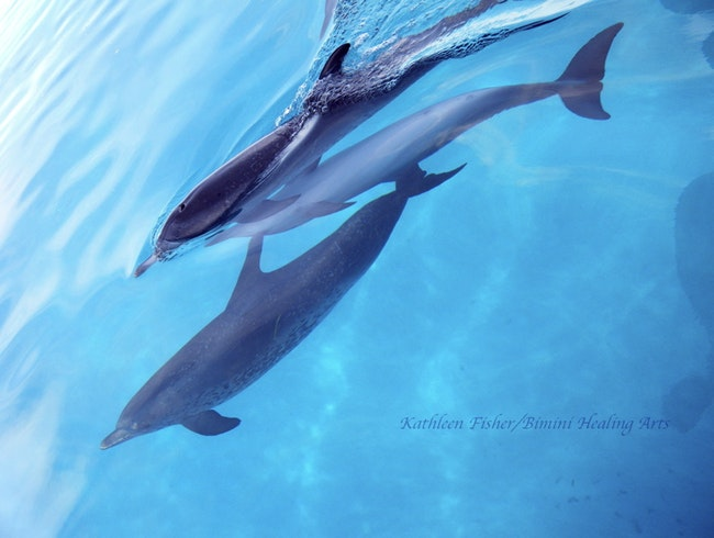 Retreat with Bimini's Dolphins