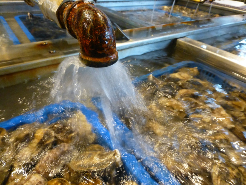 THE place for the Freshest Oysters in Seattle