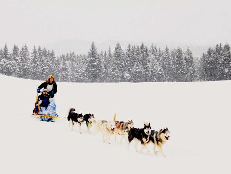 Dogsledding Mont Tremblant! Mont-Tremblant  Canada