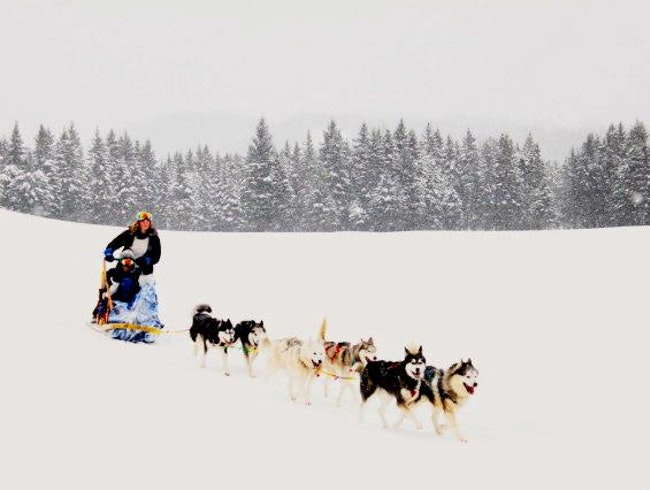 Dogsledding Mont Tremblant!